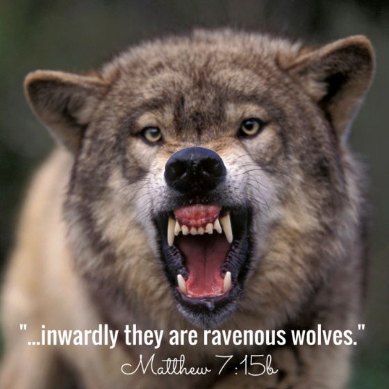 -...inwardly they are ravenous wolves.- (1)